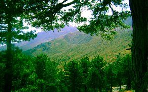 Gudal Tabiat Parkı (Kocakoru)
