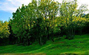 Seydişehir Koca Koru Tabiat Parkı
